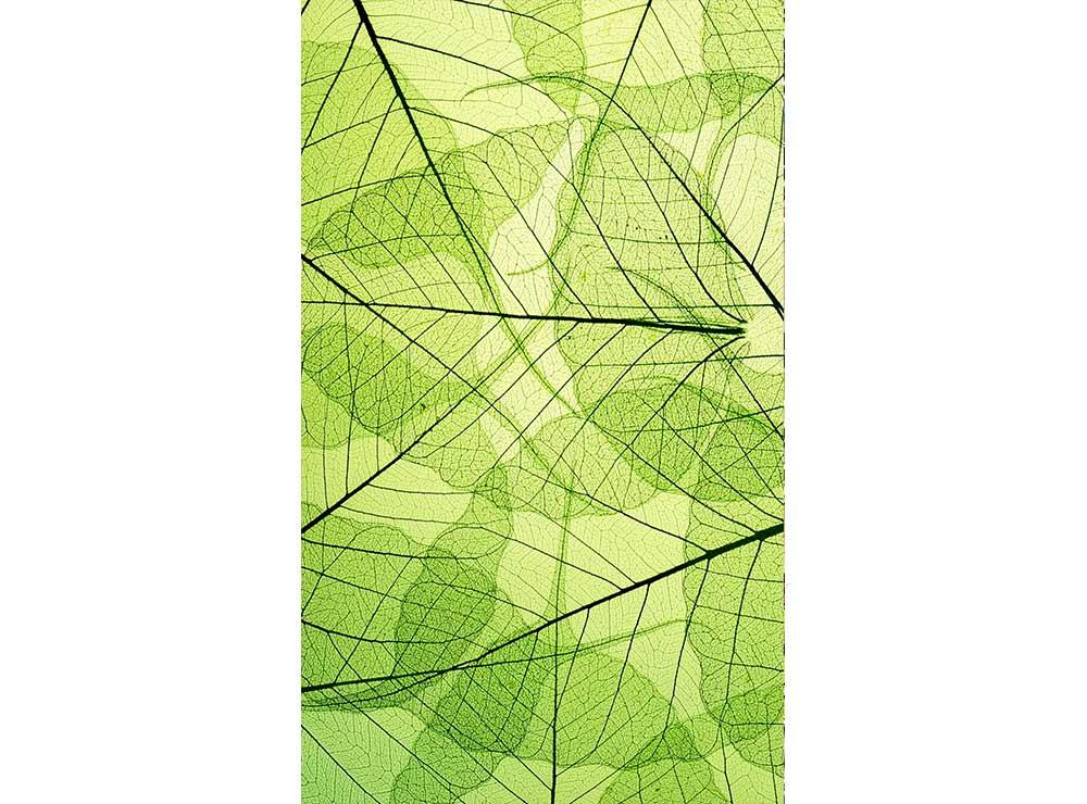 DIMEX vliesová fototapeta 150 x 250 cm MS-2-0111