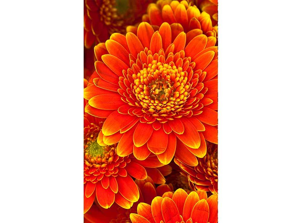 DIMEX vliesová fototapeta 150 x 250 cm MS-2-0131