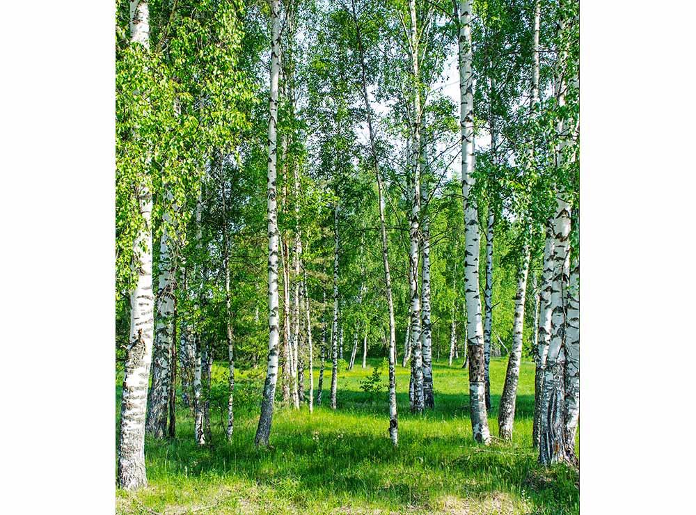 DIMEX vliesová fototapeta 225 x 250 cm MS-3-0100