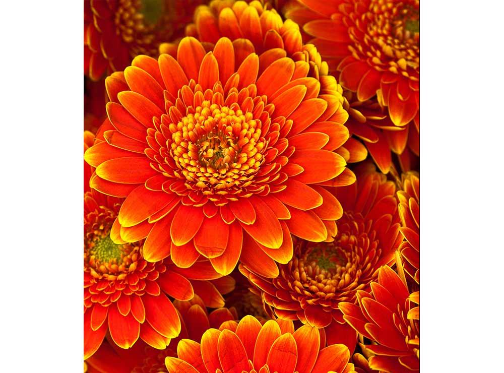 DIMEX vliesová fototapeta 225 x 250 cm MS-3-0131