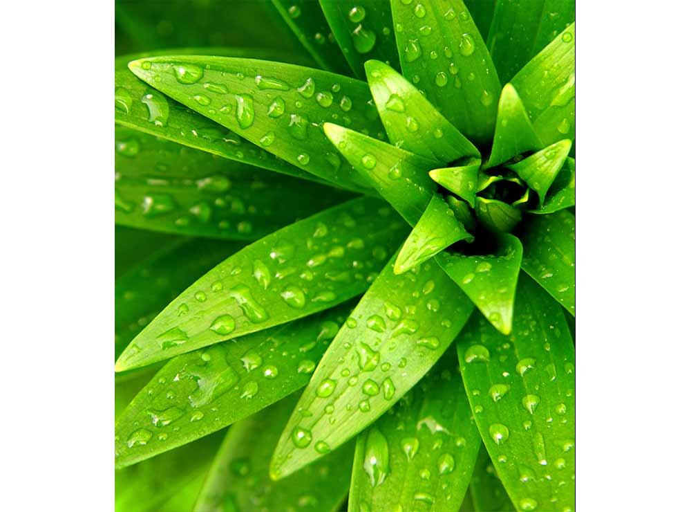 DIMEX vliesová fototapeta 225 x 250 cm MS-3-0153