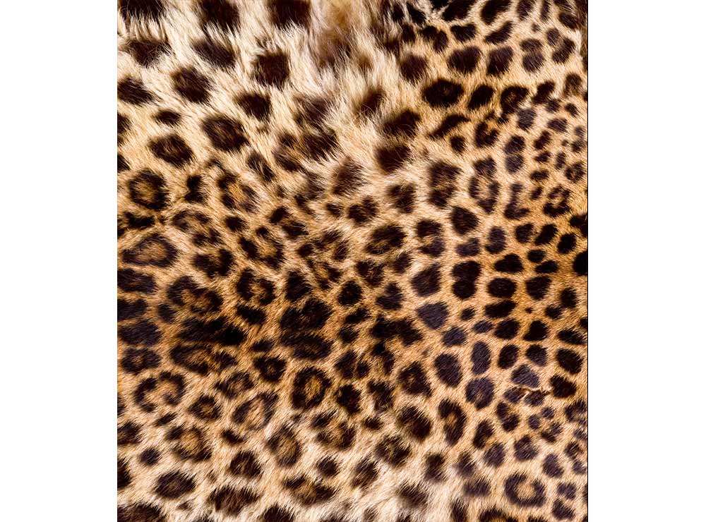 DIMEX vliesová fototapeta 225 x 250 cm MS-3-0184
