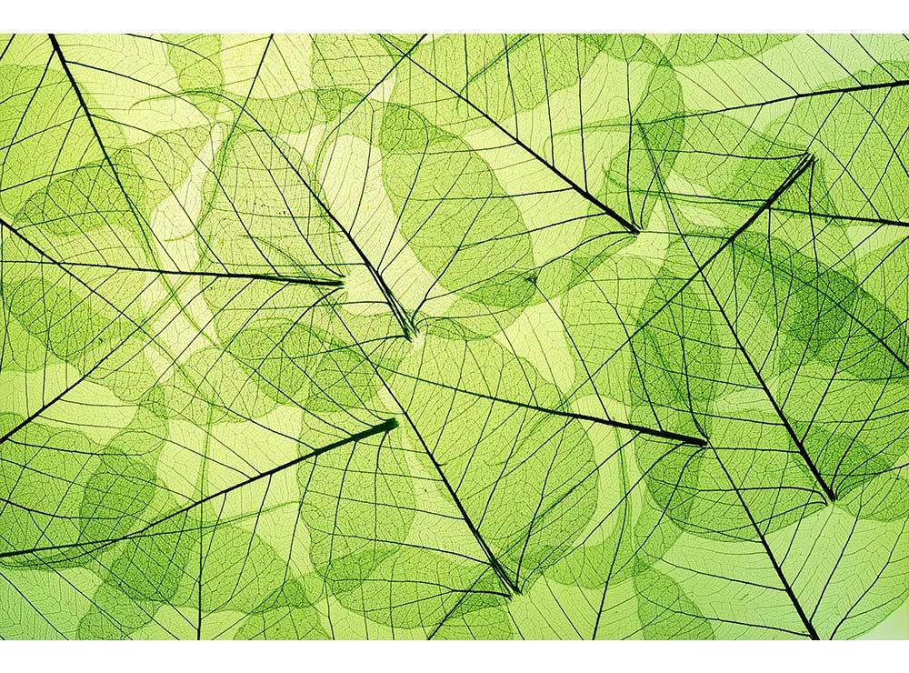 DIMEX vliesová fototapeta 375 x 250 cm MS-5-0111