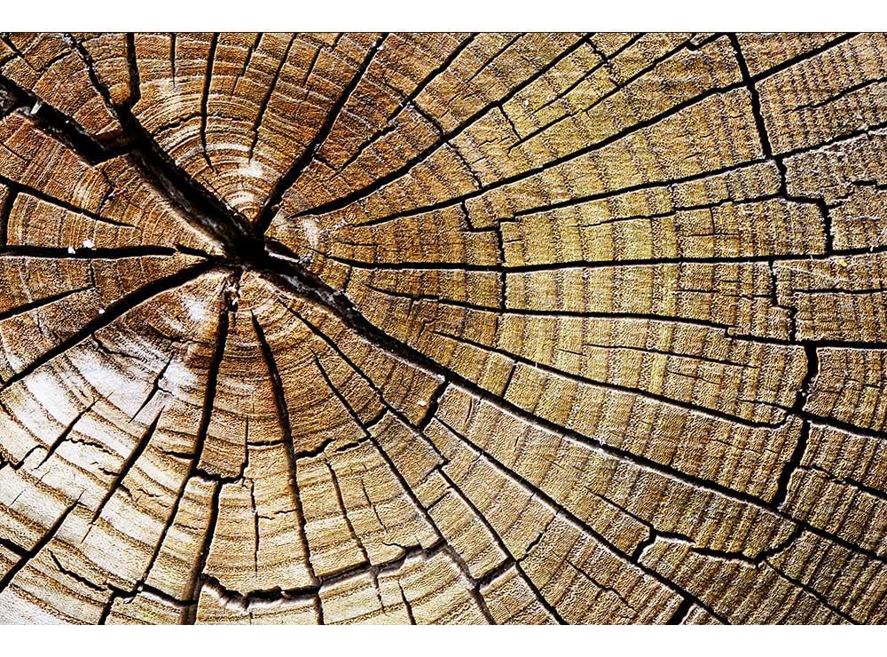 DIMEX vliesová fototapeta 375 x 250 cm MS-5-0162
